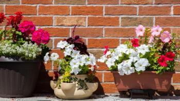 Flower pots sit in front of a brick wall.