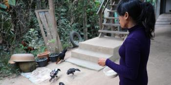 Kimchheng feeding chicken in front of her house in Siem Reap, Camnbodia